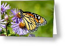Butterfly Blessing Greeting Card