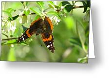 Butterfly Buds Greeting Card