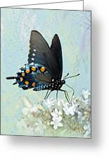 Butterfly Candy Greeting Card