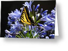 Butterfly Catcher Greeting Card