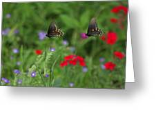 Butterfly Chase Greeting Card