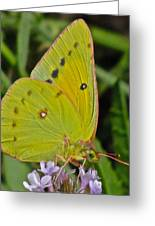 Butterfly Collection Macro Greeting Card