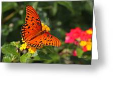 Butterfly Diaries IIi Greeting Card