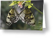 Butterfly Duo Greeting Card