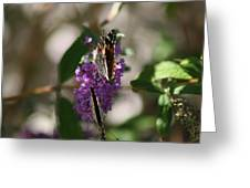 Butterfly Duo On Lilac Greeting Card