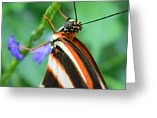 Butterfly Eye Greeting Card