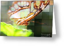Butterfly Frosted Glass Greeting Card