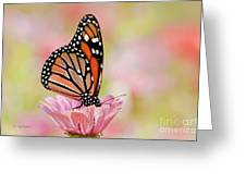 Butterfly Garden IIi Greeting Card