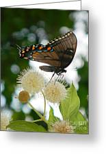 Butterfly II Greeting Card