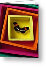 Butterfly In Box Greeting Card by Garry Gay