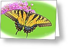 Butterfly In Candyland Greeting Card