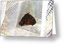 Butterfly In Network Greeting Card