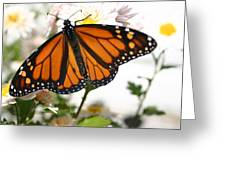 Butterfly In October Greeting Card