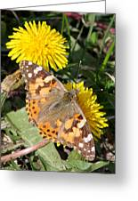 Butterfly In The Sun Greeting Card