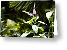 Butterfly Kisses Greeting Card by Leslie Leda