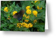Butterfly Lantana Greeting Card