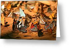 Butterfly Menagerie Greeting Card
