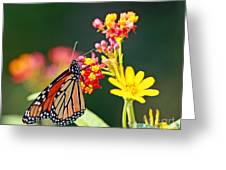 Butterfly Monarch On Lantana Flower Greeting Card