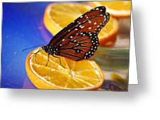 Butterfly Nectar Greeting Card