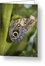 Butterfly On A Green Branch Niagara Greeting Card