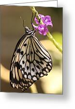 Butterfly On A Stem Greeting Card