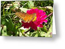 Butterfly On A Zinnia Greeting Card