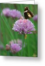 Butterfly On Clover Greeting Card
