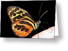 Butterfly On Finger Greeting Card