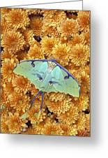 Butterfly On Flowers Greeting Card