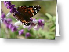 Butterfly On Lavender II Greeting Card