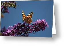 Butterfly On Lilac 2 Greeting Card