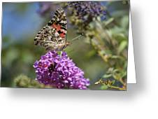 Butterfly On Lilac Greeting Card