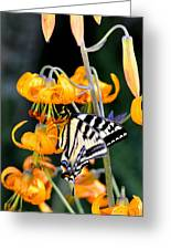 Butterfly On Lily Greeting Card by Scott Gould