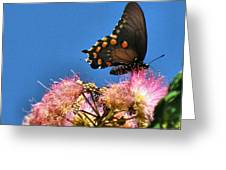Butterfly On Mimosa Blossom Greeting Card