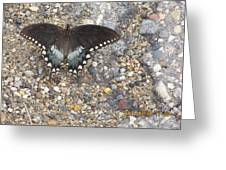 Butterfly On My Hike Route Greeting Card