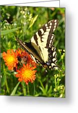 Butterfly On Orange Flowers Greeting Card
