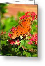 Butterfly On Pentas Greeting Card