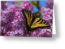 Butterfly On Pink Lilac Greeting Card