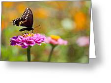 Butterfly On Pink Zinnia Greeting Card