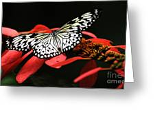 Butterfly On Red Greeting Card