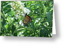 Butterfly On The Butterfly Bush Greeting Card