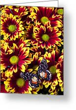Butterfly On Yellow Red Daises  Greeting Card