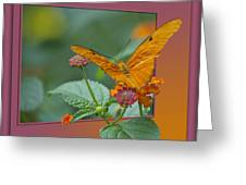 Butterfly Orange 16 By 20 Greeting Card