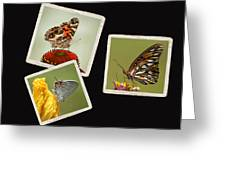 Butterfly Picture Page Collage Greeting Card