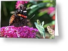 Butterfly Plant At Work Greeting Card