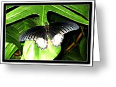 Butterfly Ready For Take Off Greeting Card