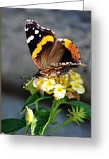Butterfly Sipping Lantana Luscious Lemonade   Greeting Card