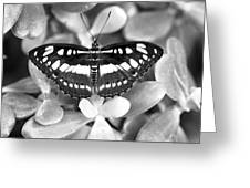 Butterfly Study #0061 Greeting Card by Floyd Menezes
