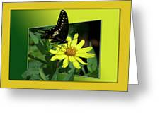 Butterfly Swallowtail 01 16 By 20 Greeting Card