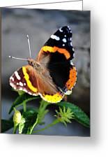 Butterfly Tai Chi On Lantana Luscious Lemonade Greeting Card